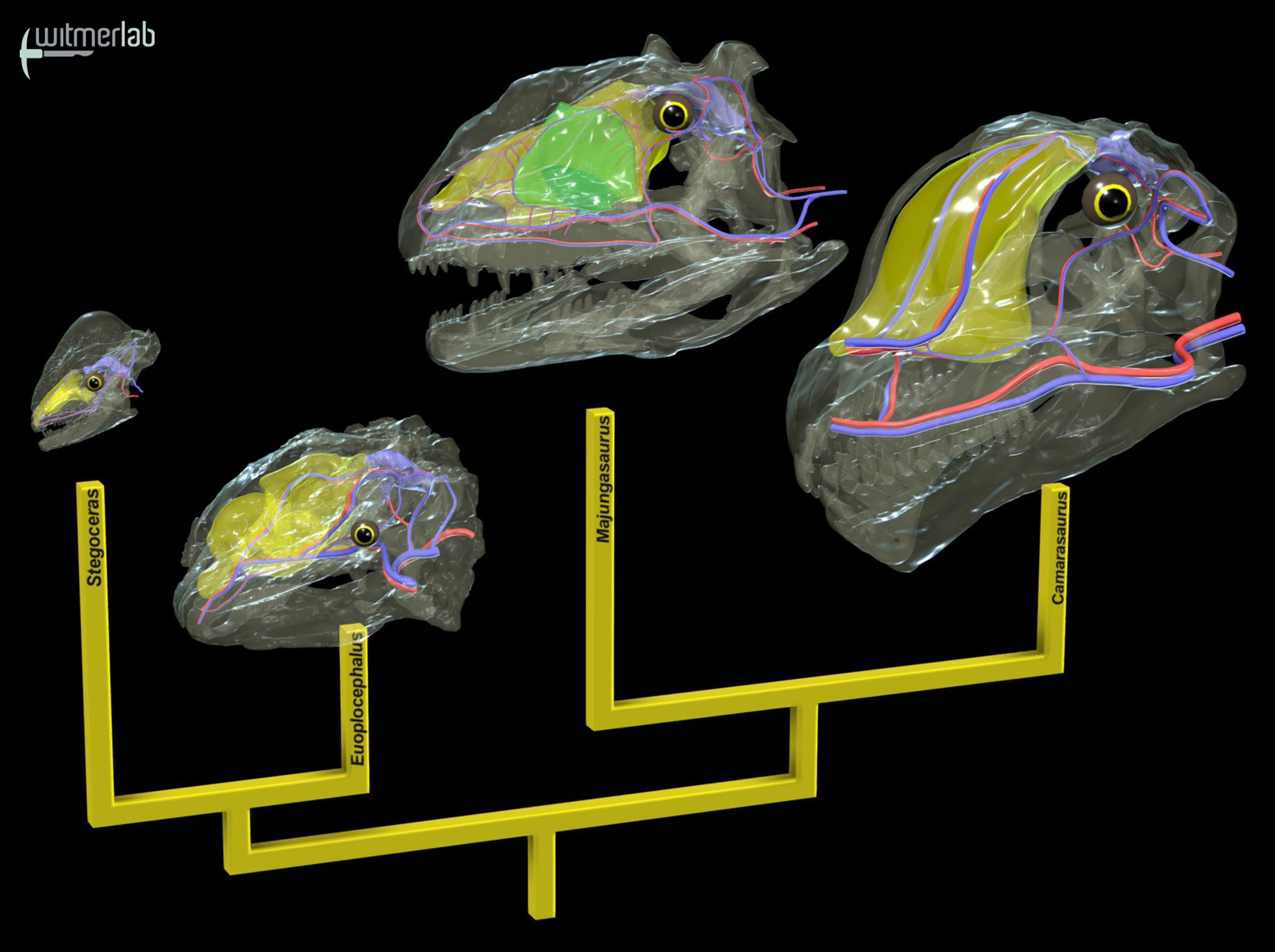 Dinosaur Brain-Cooling Strategies - main